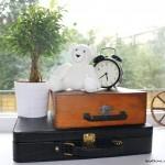 Белый медведь и новая находка